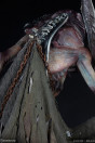 court-of-the-dead-oglavaeil-dreadsbane-enforcer-limited-edition-premium-format-statue-sideshow_S3003952_10.jpg
