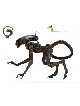 alien-3-ultimate-dog-alien-actionfigur-23-cm_NECA51597_2.jpg