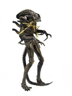 xenomorph-warrior-brown-battle-damaged-actionfigur-serie-12-aliens-23-cm_NECA51681_2.jpg